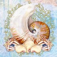 Shell Medley V Fine-Art Print