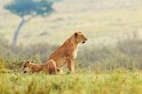 A Lion's Tail Fine-Art Print