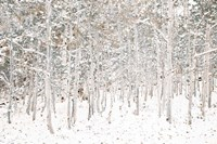 White Snow Wonderland Fine-Art Print