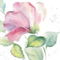 Fragrant Hibiscus I Fine-Art Print