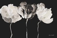 Trio in Light on Black Fine-Art Print