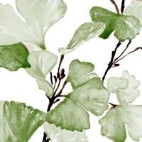 Mint Ginko Stems II Fine-Art Print