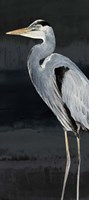 Heron on Black I Fine-Art Print