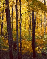 Sanctuary Woods I Fine-Art Print