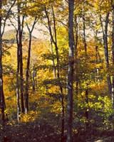Sanctuary Woods II Fine-Art Print