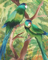 Tropical Birds II Fine-Art Print