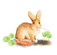 Spring Bunny III Fine-Art Print