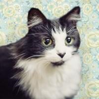 Cat on Paisley Fine-Art Print
