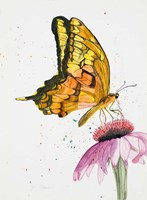 Butterfly Nectar Fine-Art Print