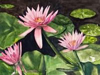 Water Lillie's Fine-Art Print