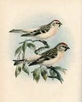 Bird Study I Fine-Art Print