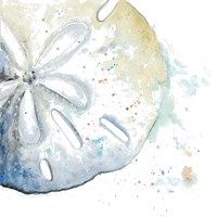 Water Sand Dollar Fine-Art Print