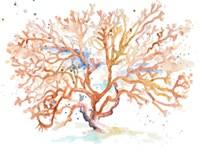 Peach Coral Fine-Art Print