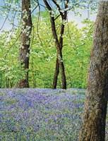 Blue Bells Fine-Art Print