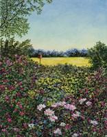 Along The Meadows Edge Fine-Art Print