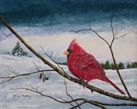 Cardinal In A Pastel Sky Fine-Art Print
