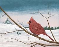 Auburn Cardinal Fine-Art Print