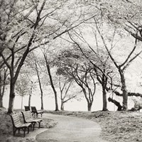 Virginia Park Walk Fine-Art Print
