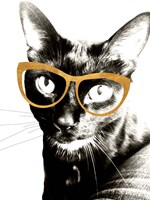 Cool Kat Fine-Art Print