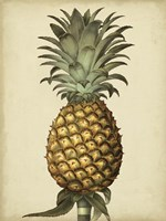 Brookshaw Antique Pineapple I Fine-Art Print