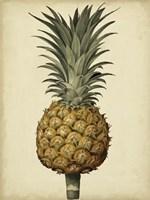Brookshaw Antique Pineapple II Fine-Art Print