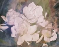 Blush Gardenia Beauty I Framed Print