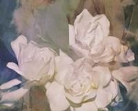 Blush Gardenia Beauty II Framed Print