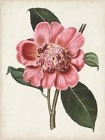Carnelian Blooms I Fine-Art Print