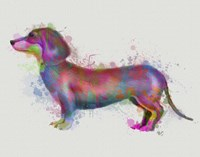Dachshund Rainbow Splash 1 Fine-Art Print
