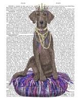 Weimaraner on Purple Cushion Fine-Art Print