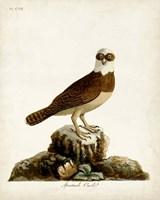 Spectacle Owl Fine-Art Print