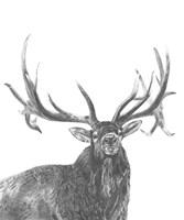 Wildlife Snapshot: Elk Fine-Art Print