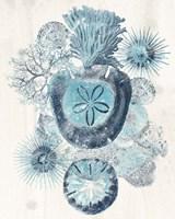 Coastal Melange I Fine-Art Print
