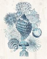 Coastal Melange II Fine-Art Print