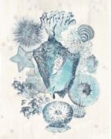 Coastal Melange III Fine-Art Print