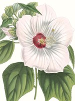 Floral Beauty IV Fine-Art Print