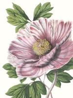 Floral Beauty VI Fine-Art Print