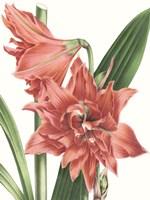 Floral Beauty VII Fine-Art Print