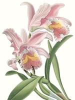 Floral Beauty IX Fine-Art Print