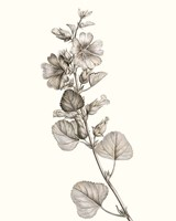 Neutral Botanical Study I Fine-Art Print