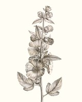 Neutral Botanical Study V Fine-Art Print