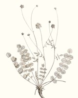 Neutral Botanical Study IX Fine-Art Print