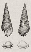 Charcoal & Linen Shells I Fine-Art Print