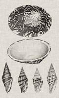 Charcoal & Linen Shells III Fine-Art Print
