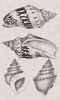 Charcoal & Linen Shells IV Fine-Art Print