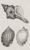 Charcoal & Linen Shells V Fine-Art Print