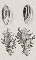 Charcoal & Linen Shells VII Fine-Art Print