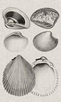 Charcoal & Linen Shells IX Fine-Art Print