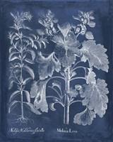 Besler Leaves in Indigo I Fine-Art Print