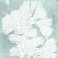 Seaweed on Aqua IV Fine-Art Print